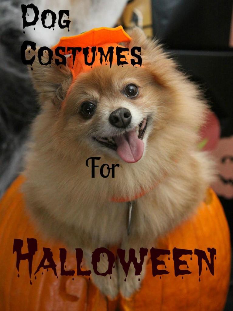 dogs halloween costumes