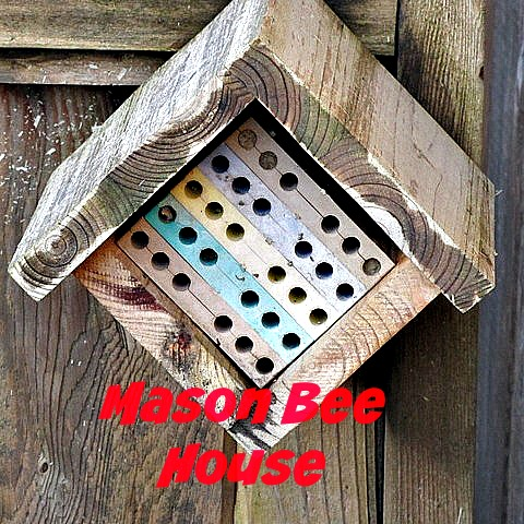 Mason Bee Habitat